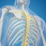 La spina dorsale ha una memoria …  e di ferro