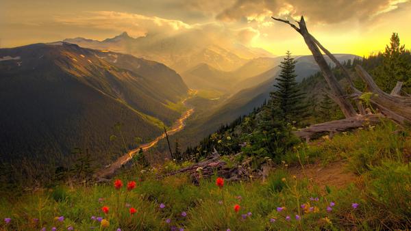 La natura é meglio di un antidepressivo